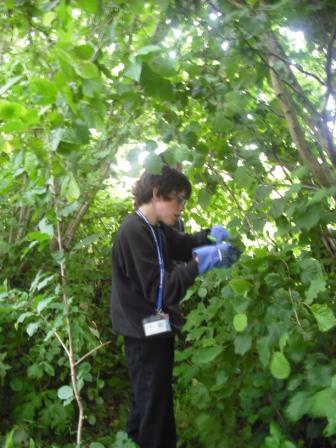 In the ecology area clearing a path