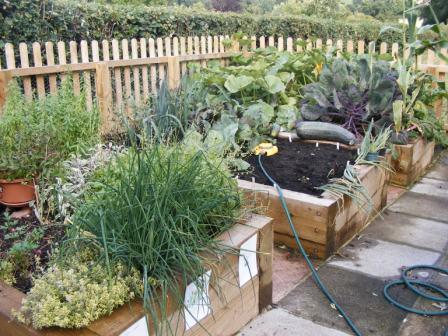 Our vegetable garden