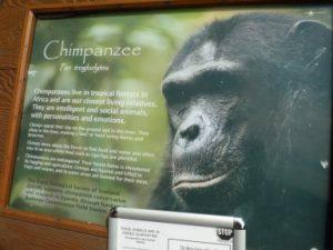 zoo-july-2010-236