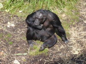 zoo-july-2010-2371