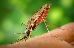Malaria Activity 1: What is Malaria