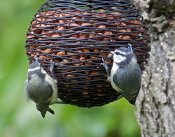 Great garden birdwatch