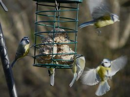 The RSPB 'Homes for Wildlife' Initiative