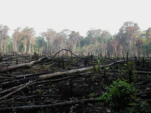 Jungle burned for agriculture By Jami Dwyer [Public domain], via Wikimedia Commons