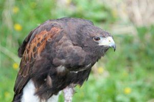 Protecting Birds of Prey