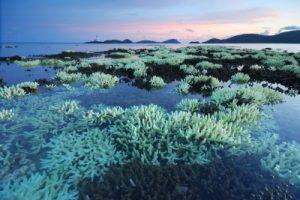Photo: Corals