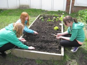 planting-in-May copy