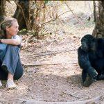 Jane with chimp