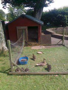ducks rehomed