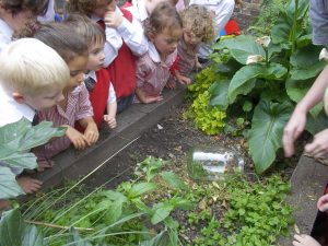 Learning about the garden