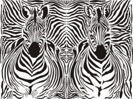 How the zebra got his stripes (science version)