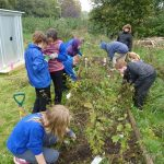 35-2013 Aut - Looking after the tree nursery - lots of weeding to do after the summer break