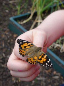 butterflies 004