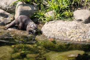 Otter hunting lunch (photo by Hamish Duncan)