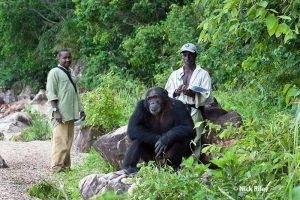 Trackers Iddi and Samson study chimpanzee Titan in Gombe National Park, Tanzania