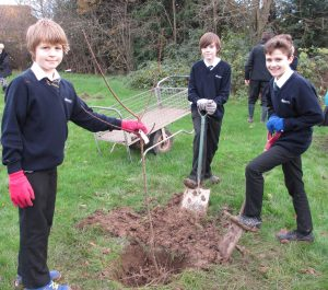 Year 7 students proudly labelling the apricot tree they have just planted.