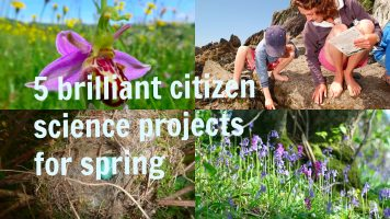5 brilliant citizen science projects for spring