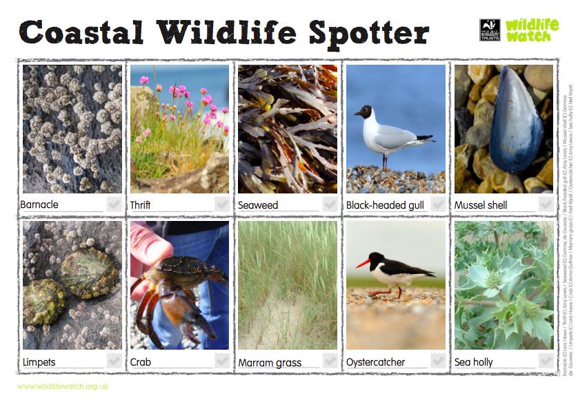 Coastal Wildlife Spotter by The Wildlife Trusts
