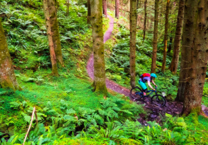 Why not try mountain biking in the woods this summer?