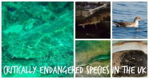 critically endangered species in the UK