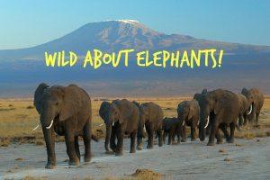 Wild about elephants!
