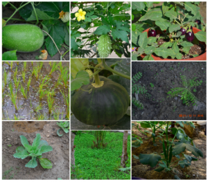 Some of the delicious crops grown by the group