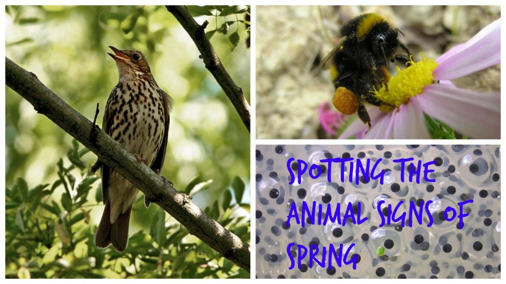 Spotting the animal signs of spring. Images via Wikimedia Creative Commons.