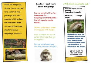 hedgehog leaflet by Elise Grundy copy