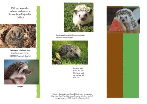 hedgehog leaflet by Freya turner-webster copy