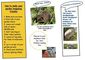 hedgehog leaflet by Serena Dibble copy