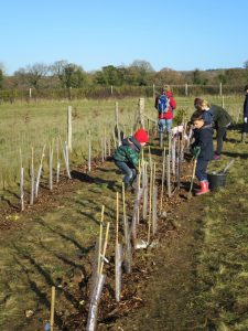 Appleshaw school planting a new hedgerow