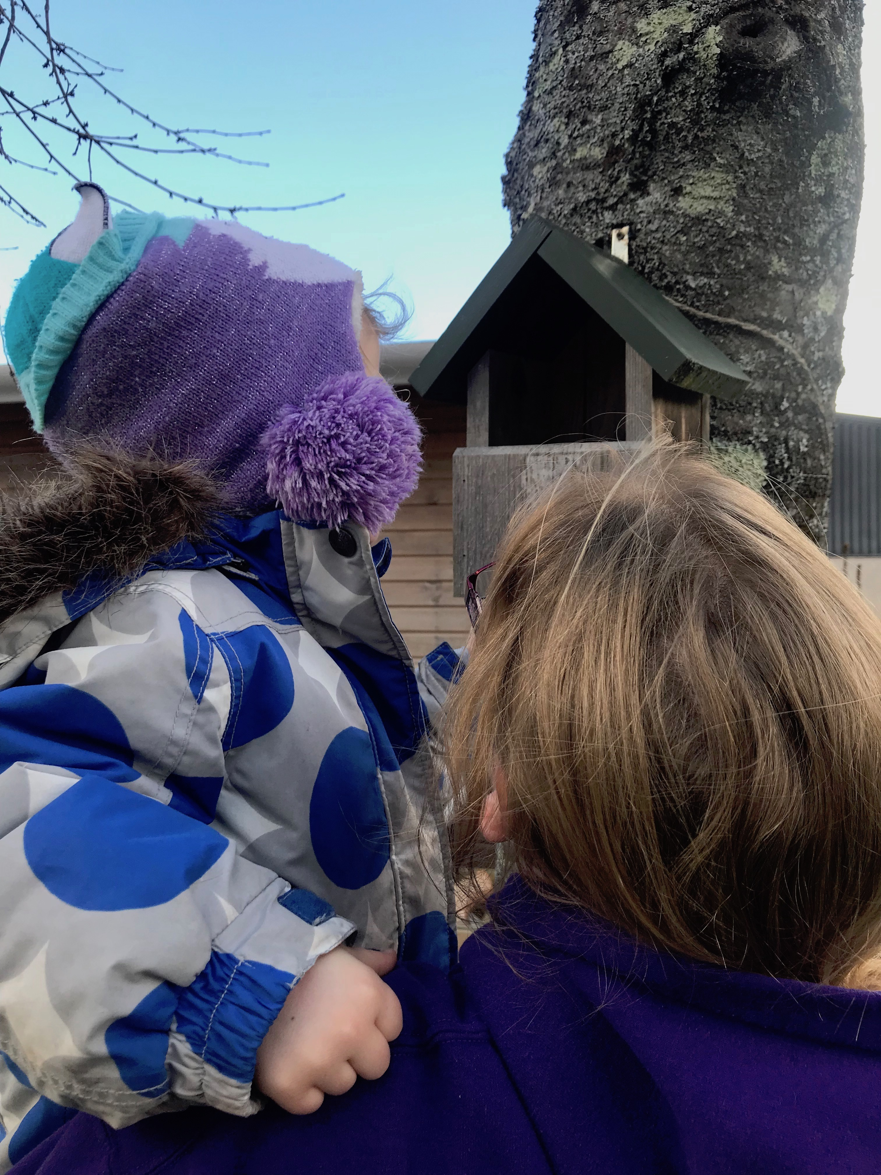 Looking into a Nest Box - Workshop 3 - Spring Term - 07.02.19.JPG