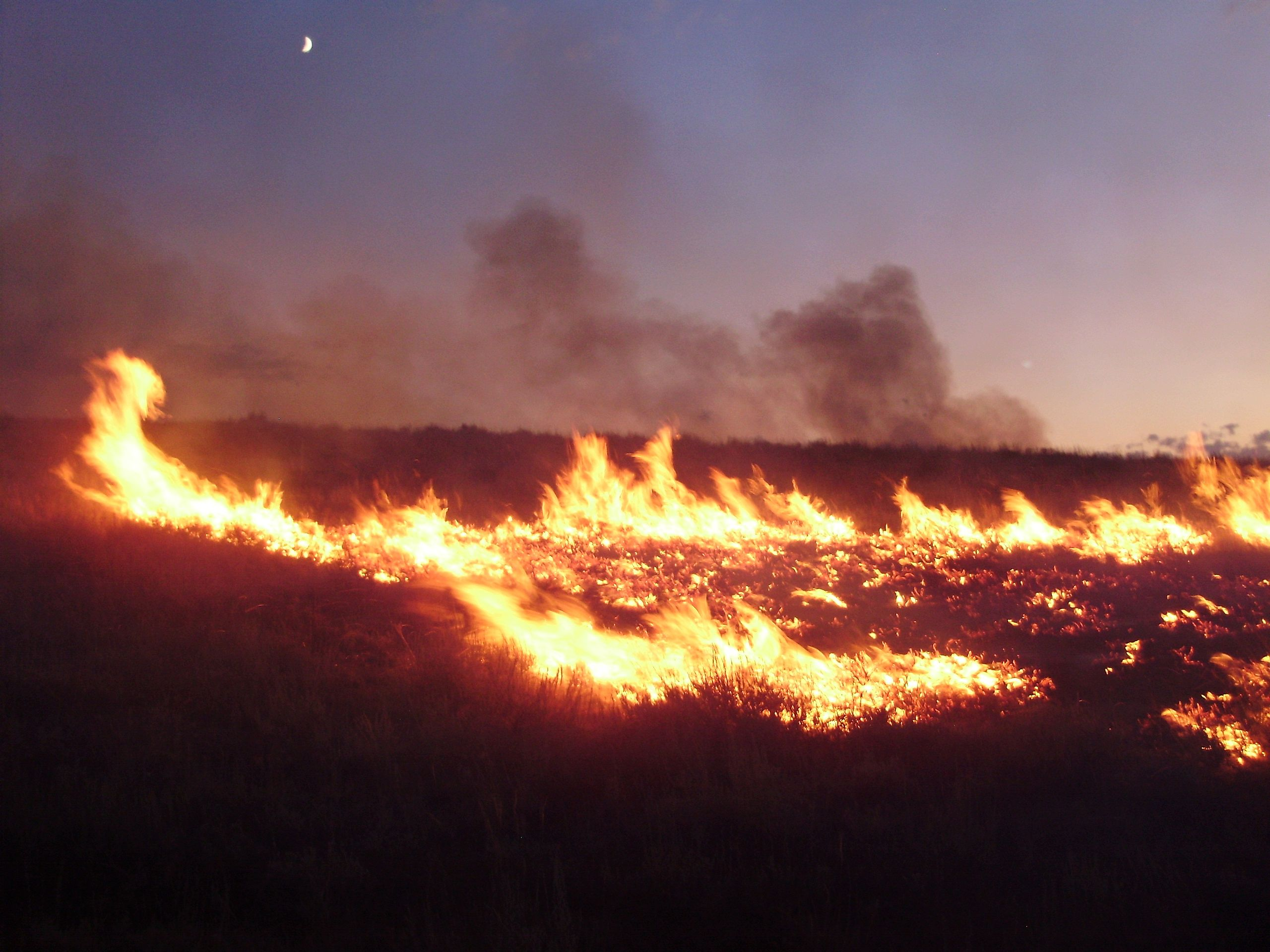 Amber Nevada Wiki what causes wildfires? – jane goodall's roots & shoots