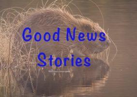 Good news wildlife stories to brighten your day