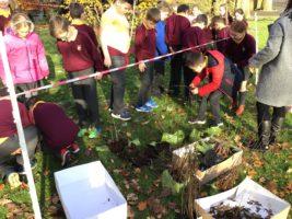 Edenderry European Tree Detectives Success