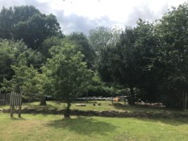 Hollycombe Primary School – In Touch with Nature Project update