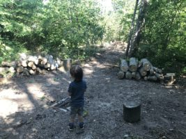 Liphook Infant School – In Touch with Nature Project update