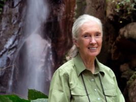 Dr Jane Goodall announced as COP26 Advocate