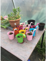 Wellbeing Garden