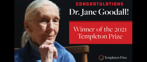 Dr Jane Goodall Receives 2021 Templeton Prize – the biggest single Award of her 60-Year career