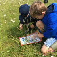 Andover Trees United – 'In Touch with Nature' project update