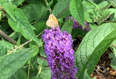 Our Success With Our Project at Goat Lees to Encourage Butterflies and Bees